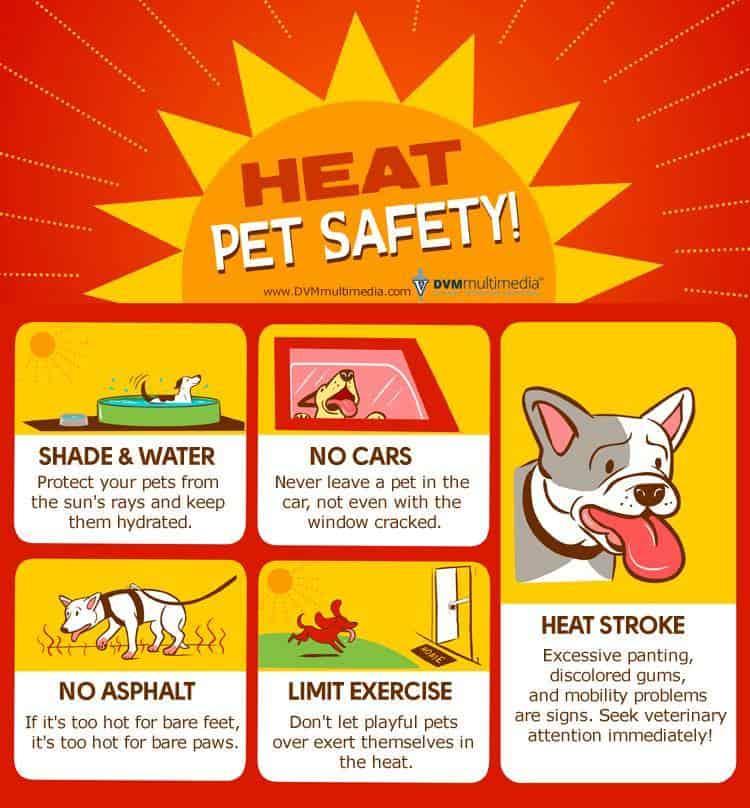Pet safety during heatwave